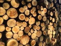 Het detail van stapel van vers gesneden hout registreert - registreren, bosbouwachtergrond royalty-vrije stock foto's