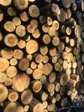 Het detail van stapel van vers gesneden hout registreert - registreren, bosbouwachtergrond royalty-vrije stock afbeelding