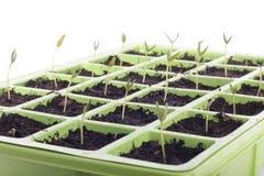 Het dienbladclose-up van zaden over wit Stock Foto