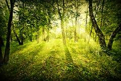 Het diepe bos van de fantasie Stock Fotografie