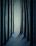 Het diepe bos van de fee ijzige winter met geheimzinnigheid licht, schaduwen, somber de winterbos, deed schrikken koud ijzig hout vector illustratie
