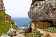 Het dier dat van Hyrax tussen de rotsen ligt Royalty-vrije Stock Fotografie