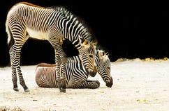 Het dier van de dierentuin Stock Foto