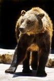 Het dier van de dierentuin Stock Foto's