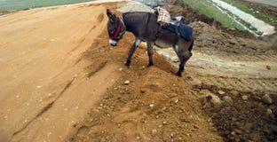 Het dier van het ezelslandbouwbedrijf royalty-vrije stock afbeelding