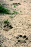 Het dier van het spoor op land Stock Afbeelding