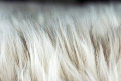 Het dier viel textuurachtergrond F Royalty-vrije Stock Fotografie