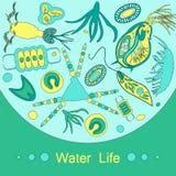 Het dierlijk planktonoverzicht van het planktonfytoplankton Stock Foto