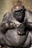 Het dierlijke denken royalty-vrije stock fotografie