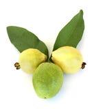 Het dierlijke hoofd van de guave Royalty-vrije Stock Foto