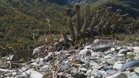 Het dierlijke karkas ligt op grond stock footage