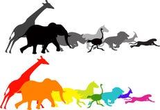 Het dierlijke rennen Stock Foto