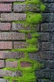 Het dikke tapijt van mos groeit van het mortier van deze oude bakstenen muur royalty-vrije stock fotografie