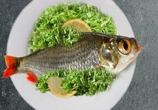 Het diner van vissen Stock Fotografie