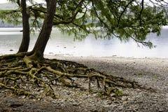Het districts overweldigende aard van het meer Stock Fotografie