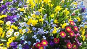 het diverse bloem bloeien royalty-vrije stock foto