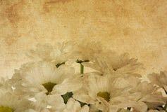 Het document van de bloem texturen. Stock Foto