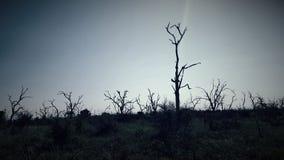 Het dode Landschap van de Boom Stock Foto