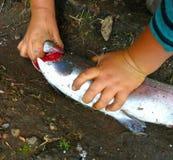Het doden van een vis, forel stock foto's
