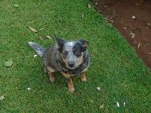 Het Dog'sleven en vrije tijd royalty-vrije stock afbeeldingen