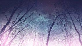 Het donkere Bos van de de Winternacht Stock Afbeelding