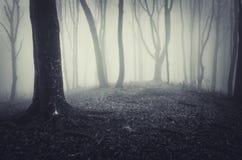 Het donkere enge griezelige bos van Halloween met mist Stock Fotografie