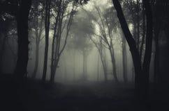 Het donkere geheimzinnige achtervolgde bos van de wegtrog Royalty-vrije Stock Afbeeldingen