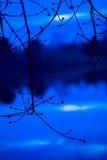 Het donkere silhouet van boom vertakt zich met gezwelde knoppen op de rivier achtergrond en daar het wijzen van het op bos De vro Stock Fotografie