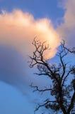 Het donkere silhouet van de dode boom tegen de hemel Stock Foto