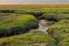 Het donkergroene gras groeien op de bovenkanten van mudflats in Washington w stock foto
