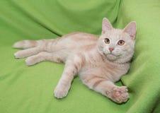 Het donkerrode gestreepte katje liggen Royalty-vrije Stock Foto
