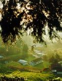 Het dorp van de theeaanplanting royalty-vrije stock afbeelding