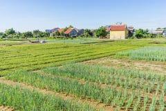 Het dorp van Traque, Quang Nam-provincie, Vietnam Royalty-vrije Stock Afbeeldingen