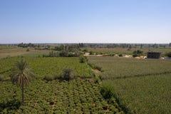 Het Dorp van wijnstokken Stock Afbeelding