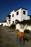 Het dorp van Xidi - met een kleine ezel Royalty-vrije Stock Afbeeldingen