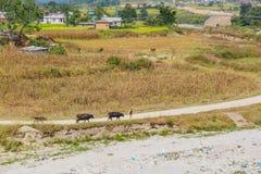 Het dorpsleven in Nepal stock afbeeldingen