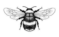 """Het dossier van de de voorraadillustratie van de honings labels†""""voorraad illustratie †"""" royalty-vrije illustratie"""