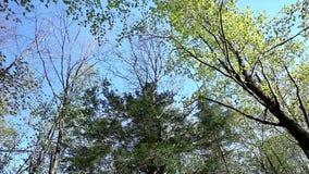 Het draaien onder de bosboomluifel op een zonnige dag stock videobeelden
