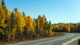 Het draaien van asfaltweg in het bos Royalty-vrije Stock Foto's