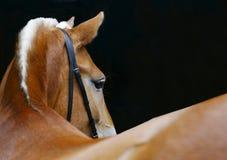 Het draaien van het paard royalty-vrije stock foto