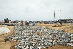 Het draaien vissen in de zon royalty-vrije stock afbeelding