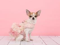 Het dragen van een roze kleding Stock Foto