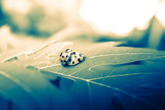 Het dramatische insect van de huwelijksdame Royalty-vrije Stock Fotografie