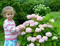 Het drie-jaar-oude meisje bevindt zich dichtbij een struik van de tot bloei komende hydrangea hortensia Stock Foto's