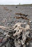 Het drijfhout op pebbled strand Stock Foto's