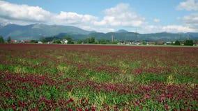 Het drijven door gebied van rode rozen stock footage