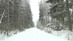 Het drijven op sneeuw behandelde manier in de winter bos4k stock videobeelden