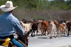 Het drijven van mijn vee Stock Foto's