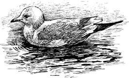 Het drijven vogel Stock Afbeelding