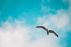 Het drijven vogel stock foto